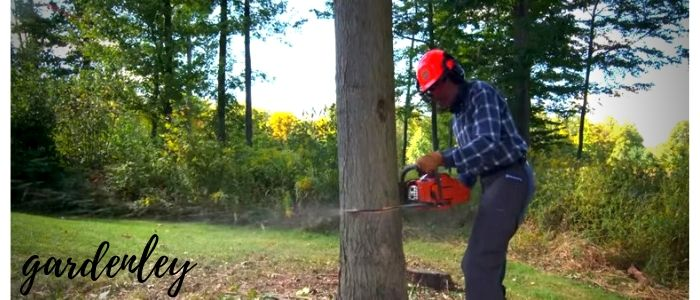 How to cut trees with a chainsaw