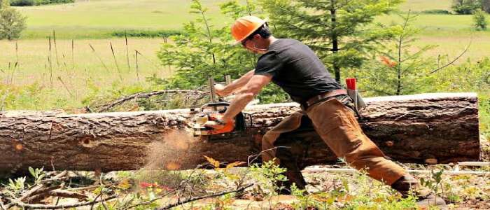 How to Use Chainsaw Mill